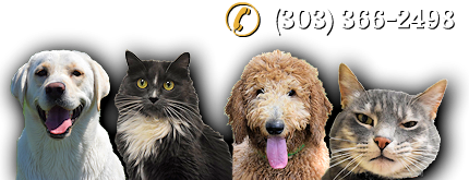 Dog and Cat Boarding Telephone Number